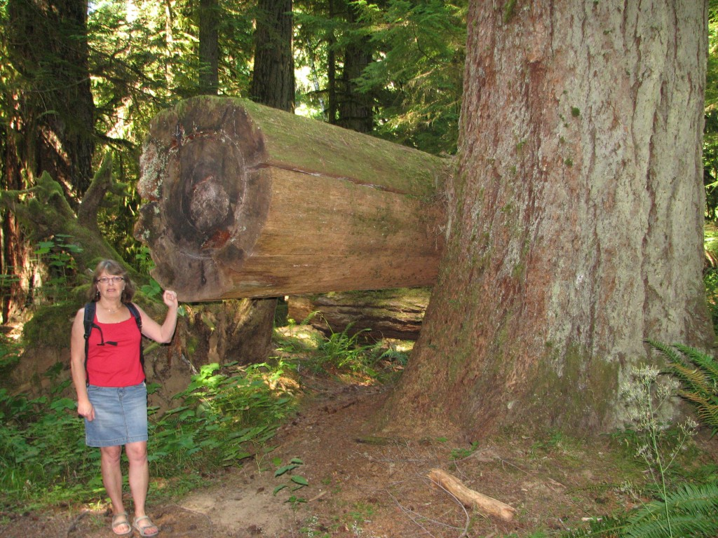 Cathedral Grove old-growth forest