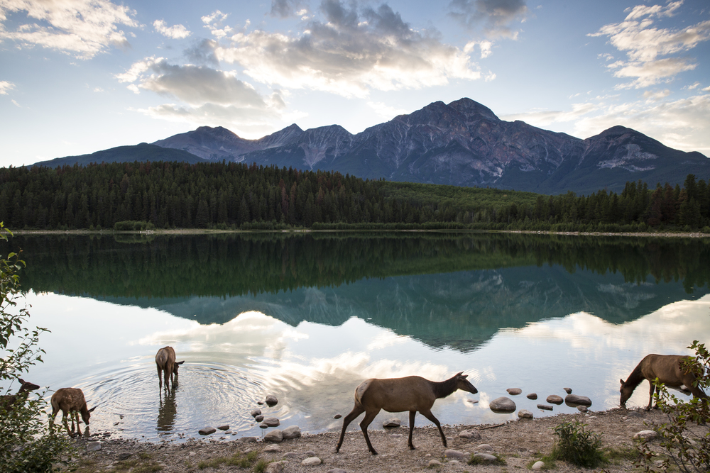 how to buy parks canada pass